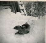 Andre in Snow