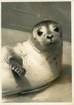 Seal Laying Around