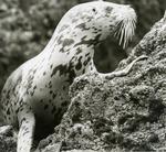 West Coast Seal