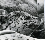 West Coast Seal 1.2