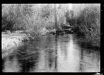 """An Iced In Brook In Parsonsfield """" Home- Fults Brook, Ice"""" by George French"""