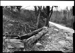 """A Log Water Trough By The Roadside. """"Log Trough"""" by George French"""