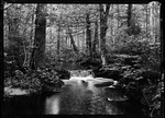 Brook In Intervale Woods. by George French