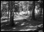 Harrison- N.H. Waganaki Wood Road. by George French