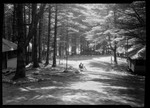 Harrison, Waganaki, Camps In Woods. by George French