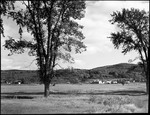 Guilford- Large Elm Trees In Field - Farm Building Afar by George French