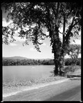 Two Men In A Canoe On A Lake, Tree Overhangs, Road Near, Mountains Afar In Sandwich, New Hampshire by George French