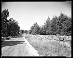 Long Road, Trees And Stone Wall In Sandwich, N.H. by George French