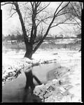 Brook Runs By Tree---Neg Not Sharp In Roslindale, Massachusetts by George French