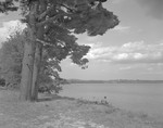 George French Sits On Bank Of Shore Fishing, Large Pines On Left, Water Right In Waterford by George French