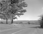 Lake Umbagog View, Road Goes By, Pines Left In New Hampshire by George French