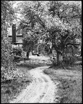 A Farmyard With Blooming Garrabrants, Dirt Road Goes By Tree--New Jersey by George French