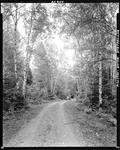 Car Parked On A Dirt Road In A Birch Woods In Moscow by French George
