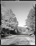 Blacktop Road Through Woods In Parsonsfield by French George