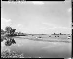 Clouds Reflected In A Pond In Fryeburg, Cattle Grazing In Pasture On Other Side Of Pond by George French