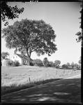 Cape Style Farmhouse In Hollis With Large Shade Tree Out Front by George French