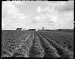 Vast Expanse Of Potato Fields With Farm Buildings In The Center At Presque Isle, Hussey's Farm by George French