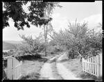 Entrance To An Apple Orchard In Waterford by George French