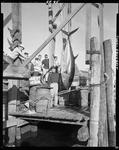 Group Of Fishermen Admiring A Tuna Hung Up For Weighing In Ogunquit by George French