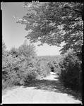 Gravel Road Through Woods In Newfield by George French