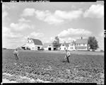 Farmhouse With Long Ell And Attached Barn, Two Men Working In Potato Patch Out Front In Mapleton by George French