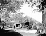 Farmer Herding Cattle Into A Barn In Hiram by George French