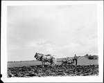 Farmer Using A Horse Drawn Harrow To Turn Under A Field In Rangeley by George French