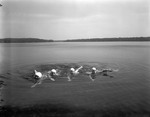 Four Women Swimming by George French