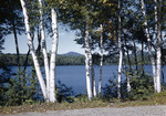 White Birches Framing Songo Pond And Mountains, Summer Scene by George French