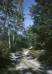 Dirt Road Through Woods In Fryeburg by George French