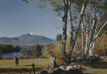 Birches Along A Field Near A Pond By Mt Chocorwa In New Hampshire, A Horse Is Grazing In The Filed by George French