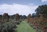 Elizabeth Park Rose Garden In Hartford, Conn by George French