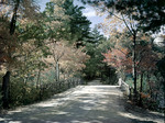 Wooden Bridge And A Country Road In Chocorua, New Hampshire by George French