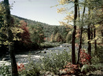 Fall Foliage Along A Stream Near Conway, New Hampshire by George French