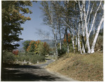 White Birches Beside The Road And Mountain Views In Jackson, New Hampshire by George French
