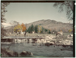 Cattle Near A Stream In Jackson, New Hampshire In Fall by George French