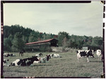 Cattle In A Pasture Near A Covered Bridge In Lancaster, New Hampshire by George French