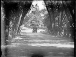 Car Driving On A Tree Lined Rural Road by George French