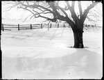 Apple Tree And Split Rail Fence In A Snow Covered Field by George French
