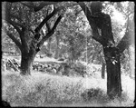 Apple Trees, Stone Wall & Dog Outside Of A Rural Home by George French