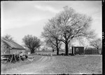 Cherry Trees Near Greenhouse In The Back Yard Of G. French's Nj Home by George French