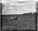 Man Plowing A Field With A Team Of Horses by George W. French