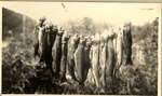 An Evening'S Catch of Trout Upper South Branch Ponds, 1931, (Shailer Philbrick) by David Field and Shaiker Philbrick