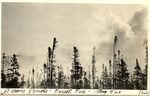 Basin Ponds Forest Fire, 9 August 1923 by David Field