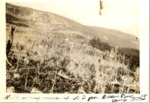 North Along Moraine Belt from Basin Pond Camp, 1928 (Anters) by David Field