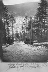 Annis Brook Valley—E.B. Draper Logging Operation, 1914. Photo by Judge by David Field