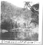 Pond on Inlet to Davis Pond by David Field