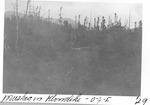 Muskeag in Klondike, O.J.I., 1929 by David Field