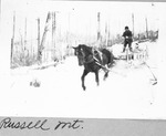 Horse Hauling 4-Foot Wood on Russell Mt. by David Field