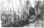 Wassataquoik Tote Road Above Draper Half-Way Camps (E. B. Draper) (Looks Like A Bird Hunting Expedition) by David Field